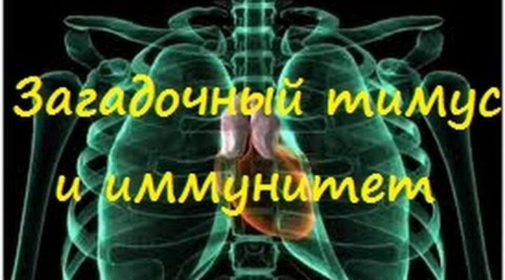 Загадочный тимус и иммунитет